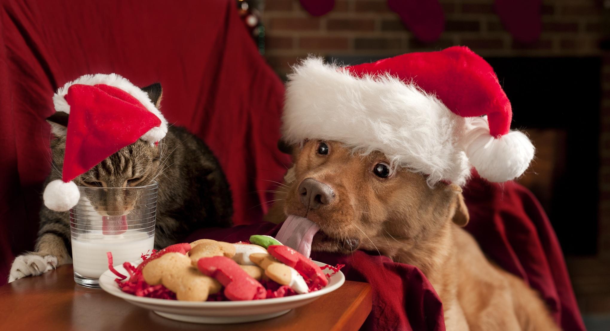 161204-Hond-Kat-feestdagen2.jpg