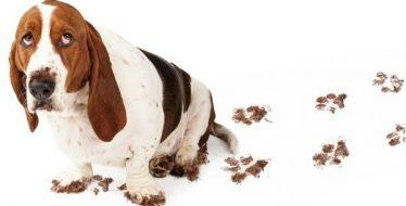 Dierenkliniek Crooswijk hond