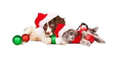 Dierenkliniek Crooswijk hond kat feestdagen