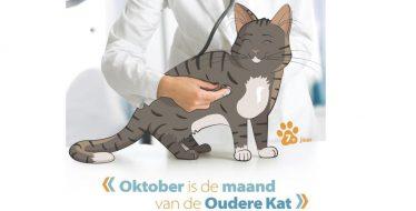 Maand oudere kat Dierenkliniek Crooswijk 2019
